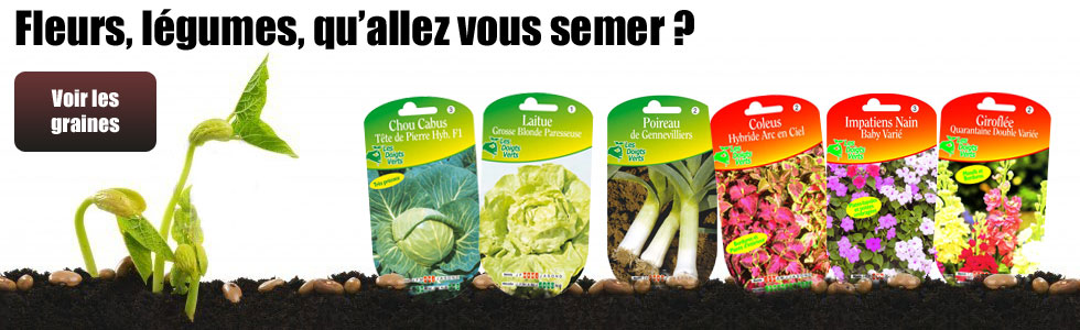 graine disponible sur le Carrefour de la fleur